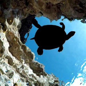 Turtie the Turtle at home at Kilsby Sinkhole